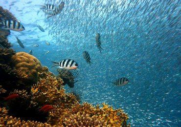 Los océanos podrían cambiar de color por calentamiento global