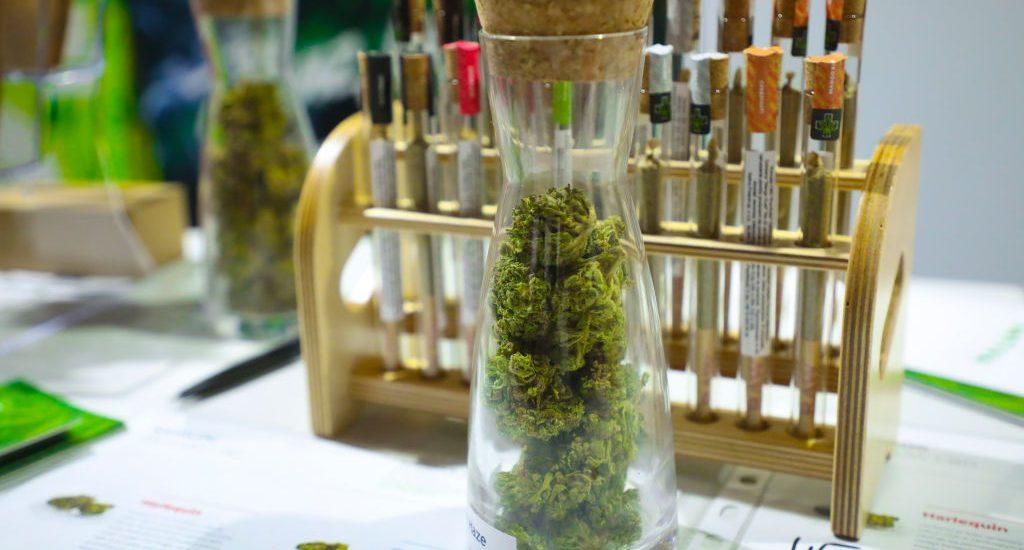 Estos son los sueldos del personal que trabaja en la industria de la marihuana legal | Foto: Getty Images